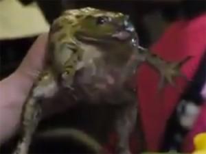 girleatslivefrog